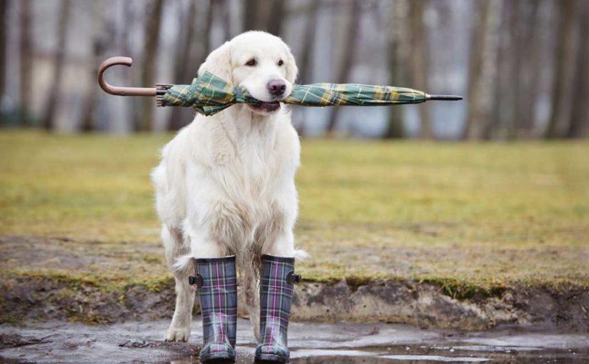 La triste storia del cane senza una scarpa (Nonsense)