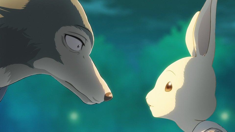 Haru e Legoshi, la coniglietta e il lupo di Beastars, si guardano negli occhi